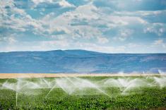 irrigate